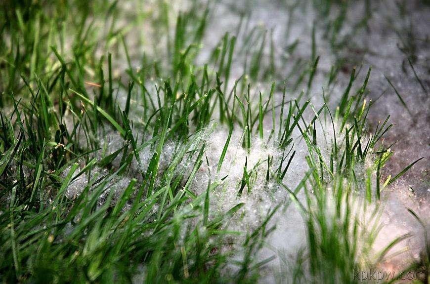 钻石地毯 人造草坪 除雪