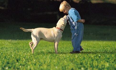 钻石地毯--人造草适合儿童吗?会不会对儿童造成伤害?