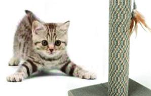 宠物毯-系列-丙纶宠物地毯