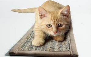 宠物毯-系列-丙纶宠物亚博vip